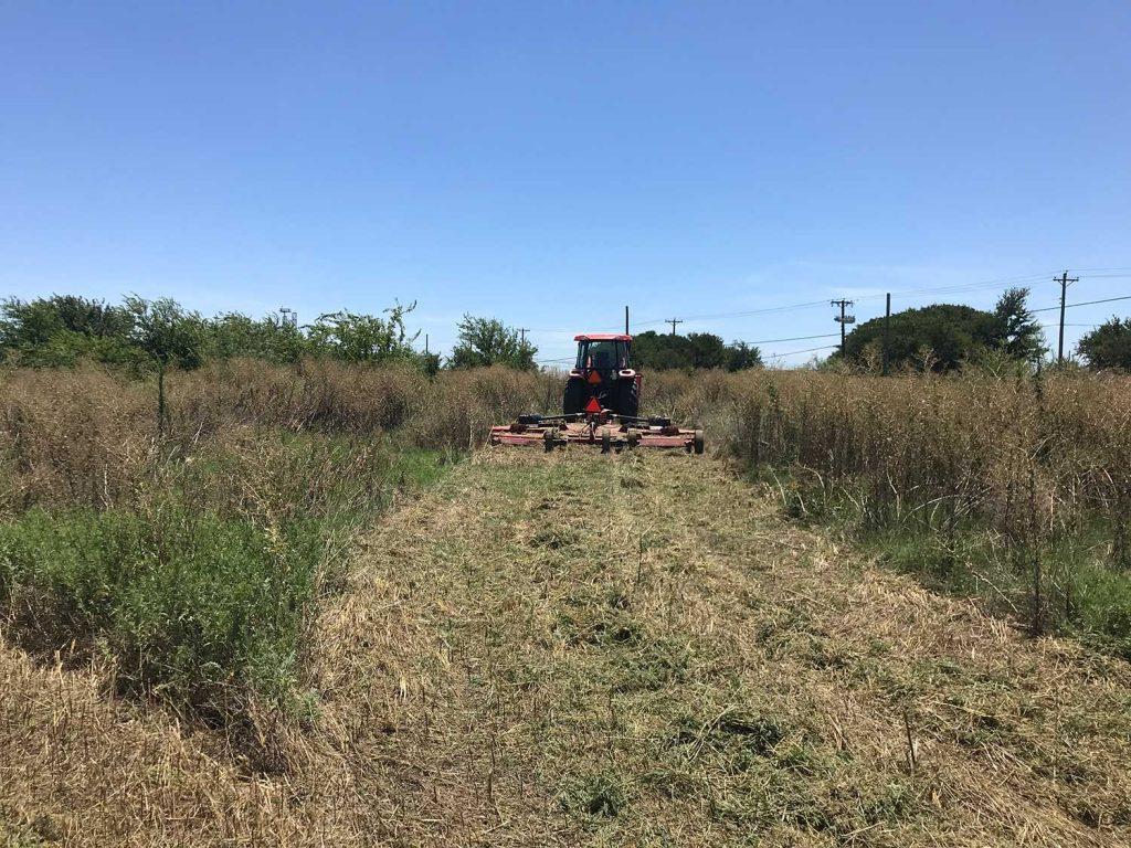 cutting overgrown grass