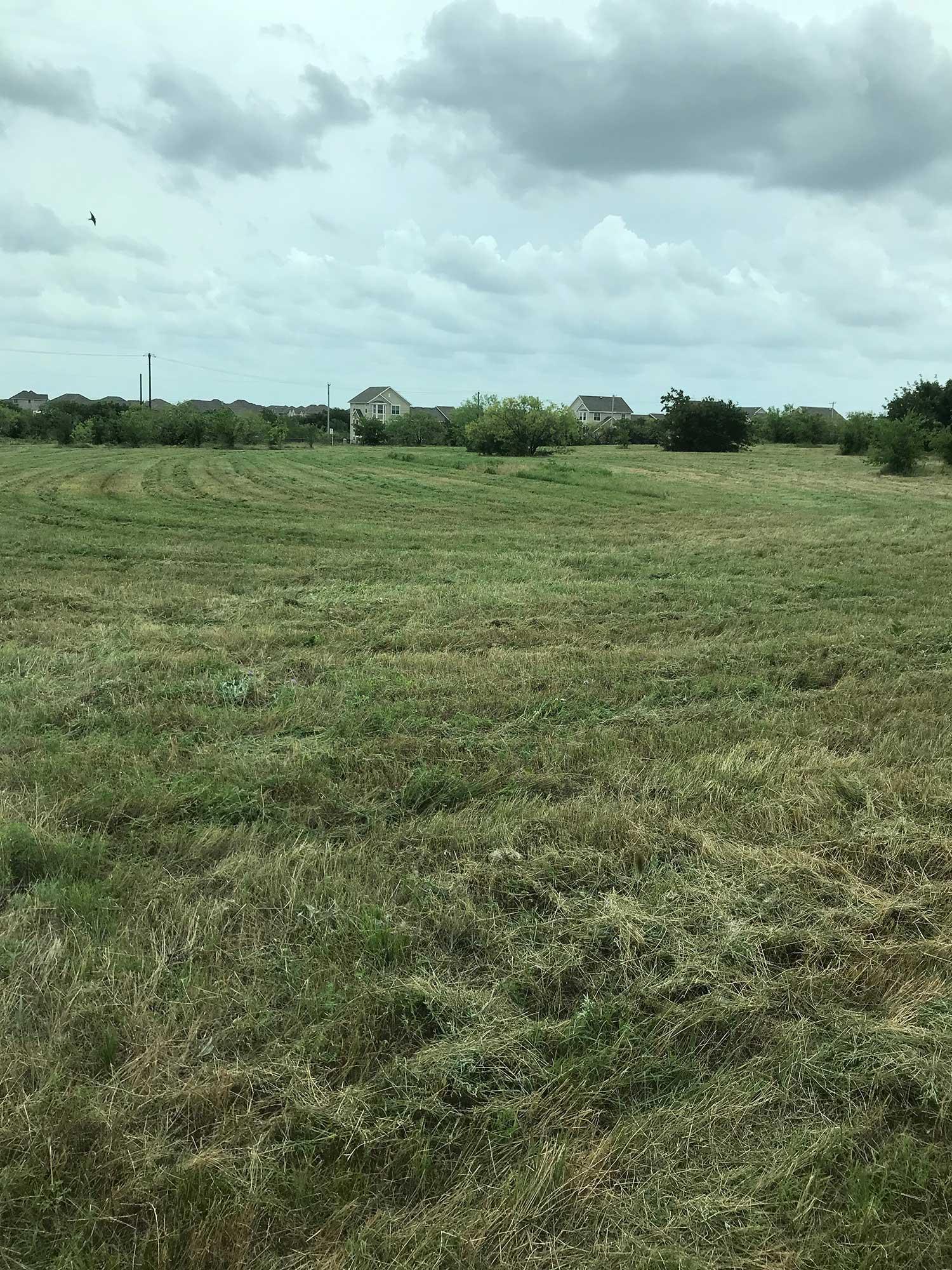 Cut grass